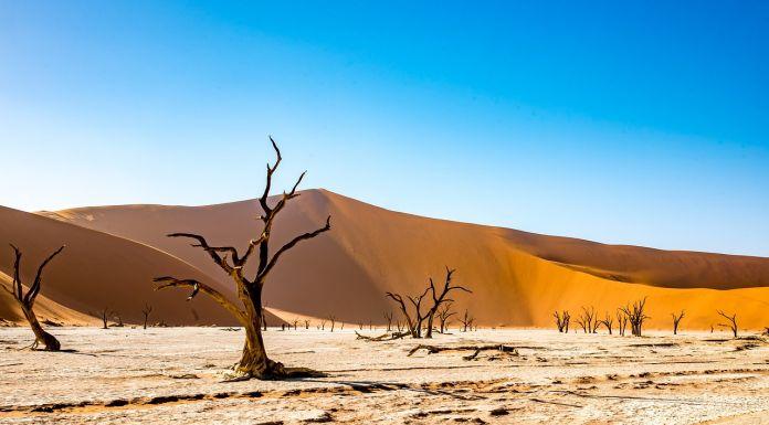 Private Safaris ouvre les réservations sur l'Afrique